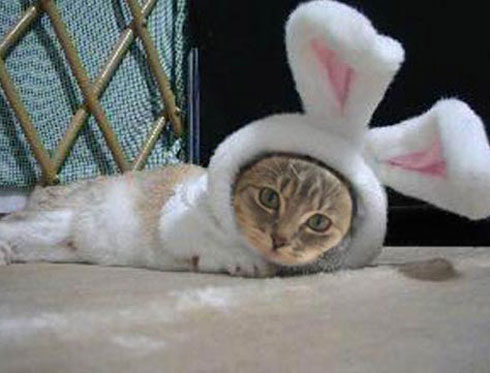 под знаком года кота кролика