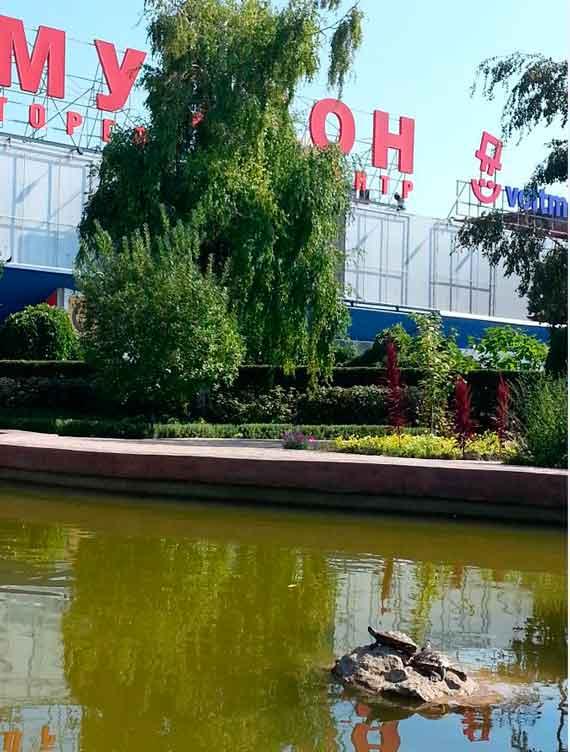"""Севастопольцы спасают черепашек у """"Муссона"""""""